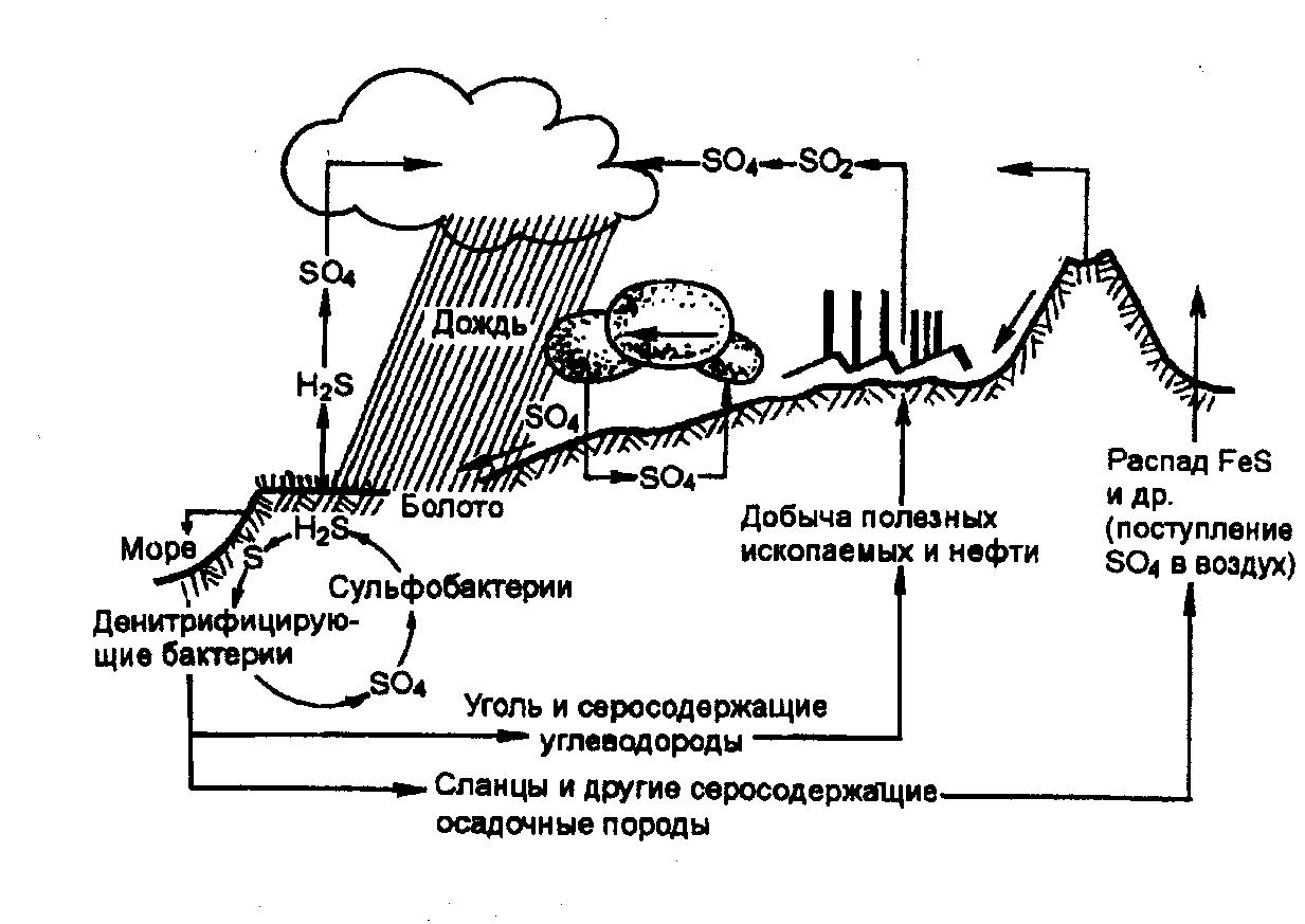 Круговорот сульфатов в природе